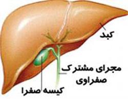 کارکرد کیسه صفرا و بیماریهای مربوط به آن
