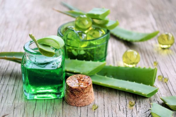 بیشمار خواص درمانی از گیاه آلوئه ورا