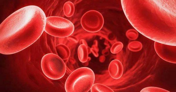 چه گیاهانی کار تصفیه کننده ی خون را بر عهده دارند؟