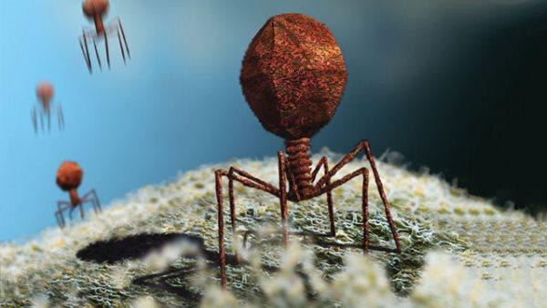 ویروس چیست و چگونه وارد بدن می شود؟