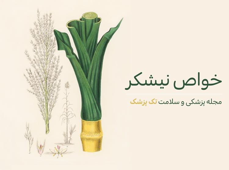 فواید و خواص گیاه نیشکر