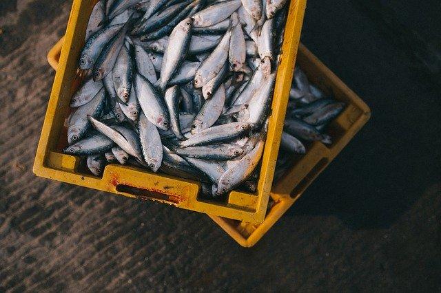 چه ماهی بخوریم؟