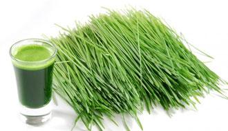 سبزه ی گندم
