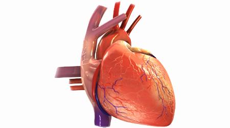 پزشک چگونه نارسایی قلبی را تشخیص می دهد؟