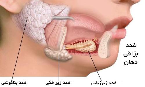 اطلاعاتی در مورد بزاق مایع حیاتی بدن