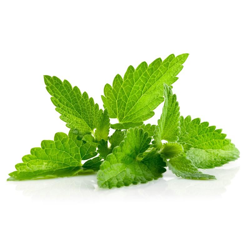 اطلاعاتی در مورد چای گزنه و فواید آن برای سلامت بدن و پوست و مو