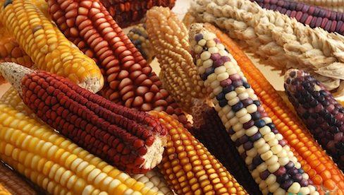 Photo of اثرات مواد غذایی اصلاح ژنتیکی شده بر سلامت بدن