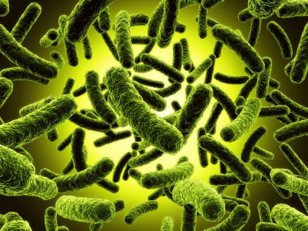 میکروبی ترین و پر عفونت ترین بخش بدن