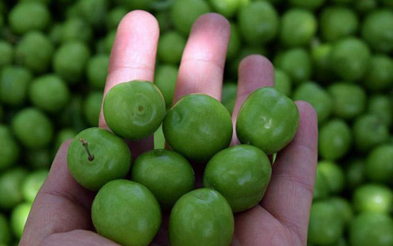 فواید گوجه سبز در بارداری