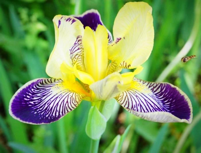 خواص زنبق برای زیبایی