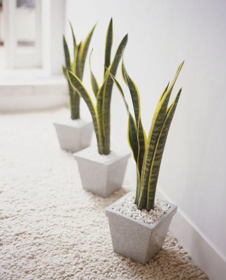 گیاهان تصفیه کننده هوای خانه