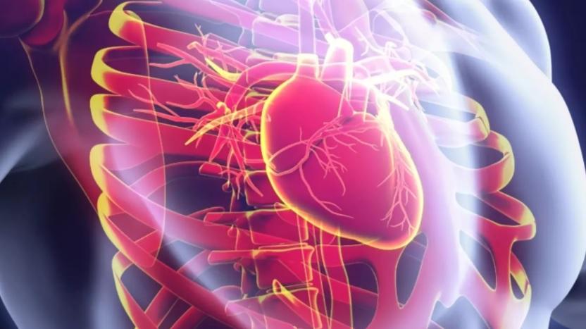 داروی گیاهی برای درمان تپش قلب